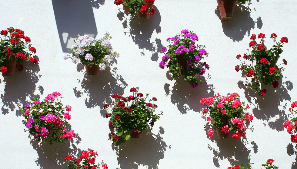 Córdoba is a city of flowers and brilliant light