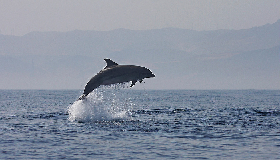Whales and dolphins pass through the Straits on their way to the Mediterranean or returning to the Atlantic