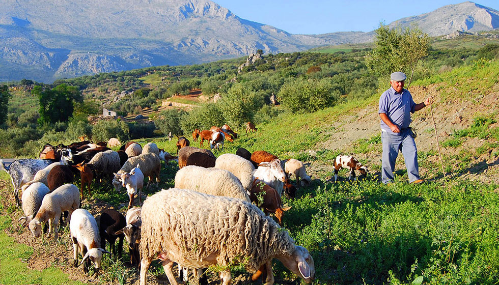 A typical pastoral scene in the Axarquía