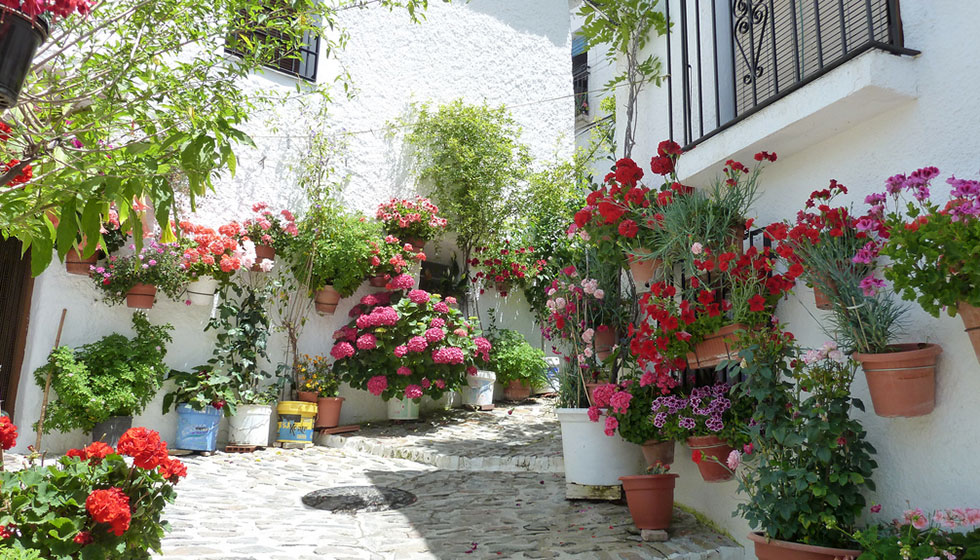 Roses and geraniums spill from every nook and cranny